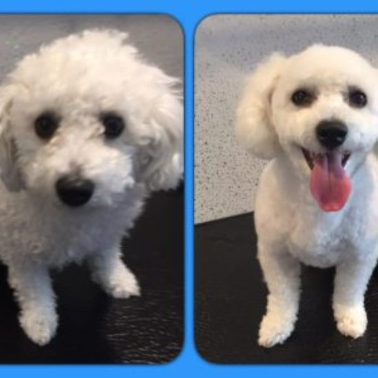 Jenny - Before & After her dog groom at Shaggy to Chic