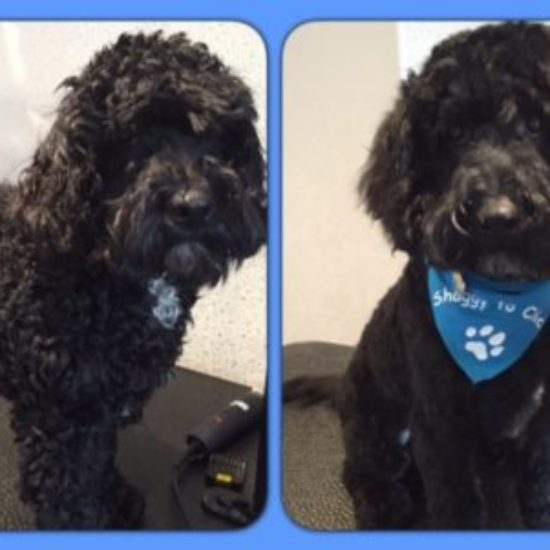 jacko - Before & After his dog groom at Shaggy to Chic