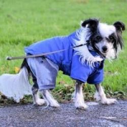 Special Care for Senior Pets
