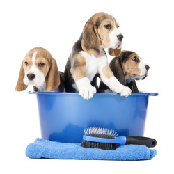 Puppy Pampering Induction