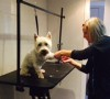 Charlie during his dog groom at Shaggy to Chic