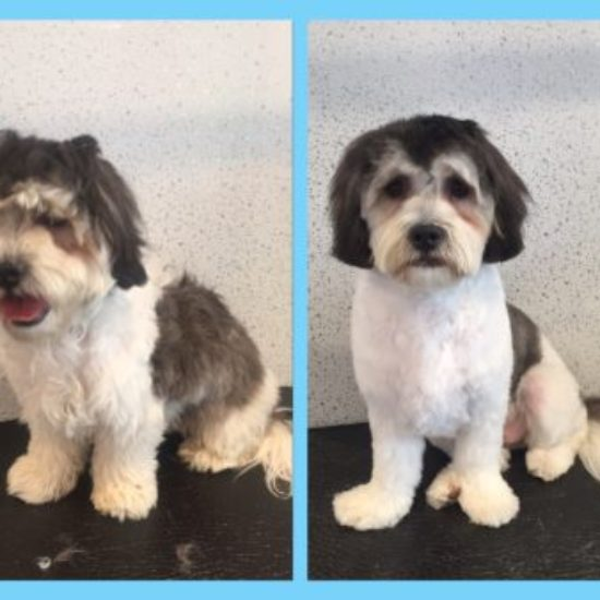 Shaggy to Chic Pet Spa Boutique