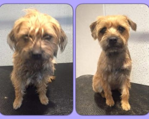 Amber - Before & After her dog groom at Shaggy to Chic