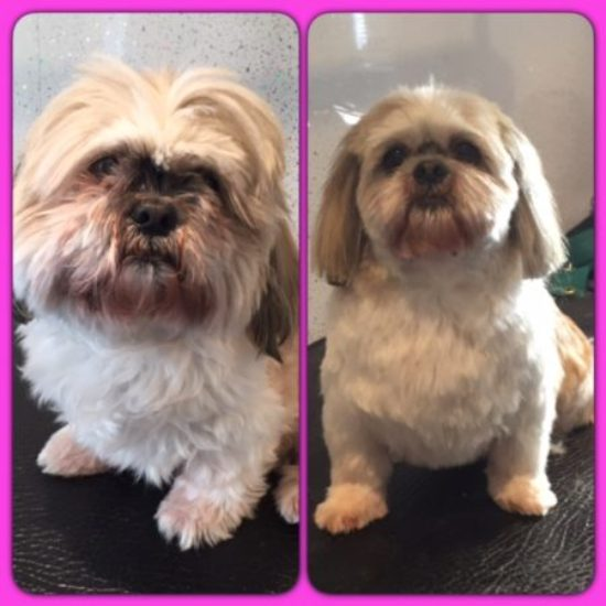 April - Before & After her dog groom at Shaggy to Chic