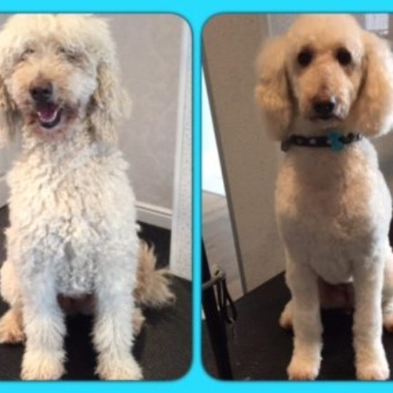 Candy - Before & After her dog groom at Shaggy to Chic