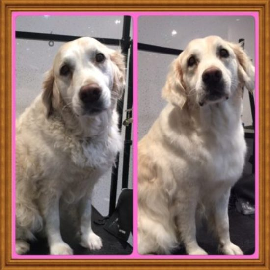 Mary - Before & After her dog groom at Shaggy to Chic