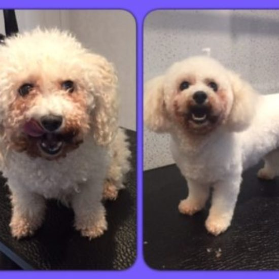 Sophie - Before & After her dog groom at Shaggy to Chic