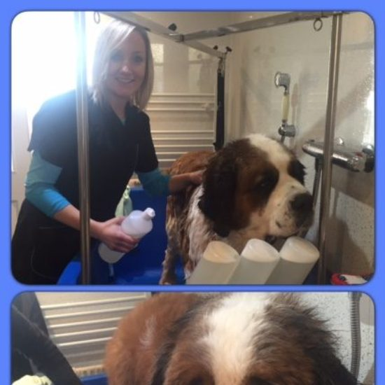 Tinkerbell during his dog groom at Shaggy to Chic