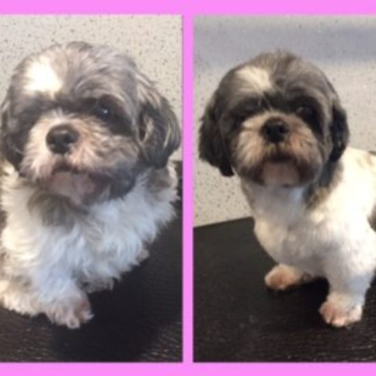 Floffy - Before & After her dog groom at Shaggy to Chic