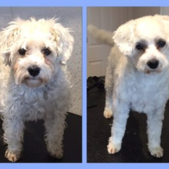 Bunty - Before & After her dog groom at Shaggy to Chic