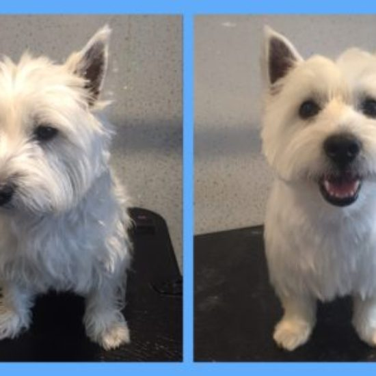 Reggie - Before & After her dog groom at Shaggy to Chic